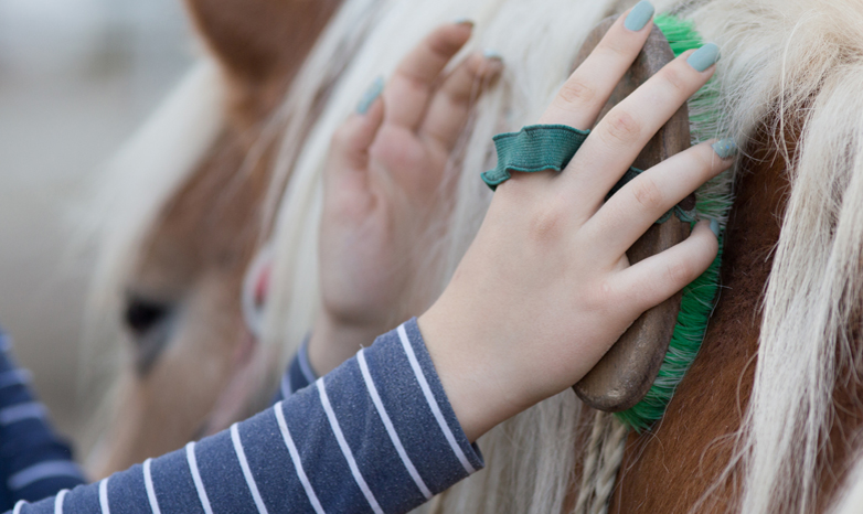 hands grooming a horse