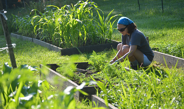 macoskey center sustainability garden