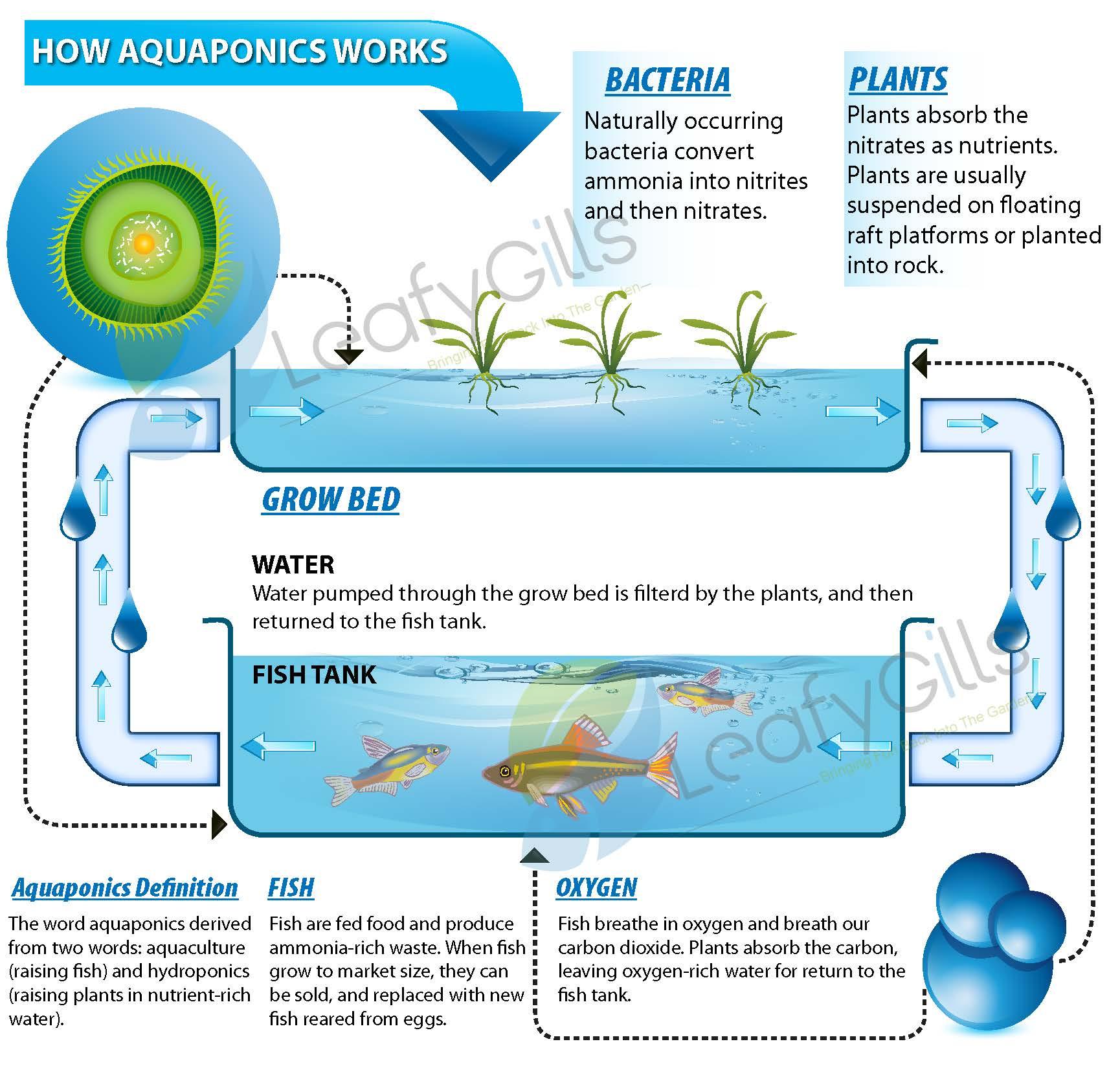 Aquaculture Hydroponic Diagram - Block And Schematic Diagrams •