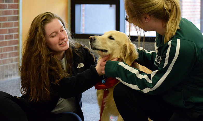 Paws and Relax therapy dog with students