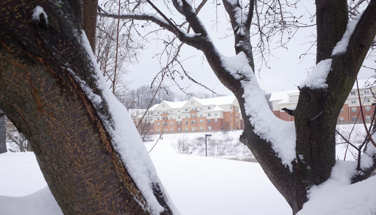 Trees covered in snow in front of residence halls