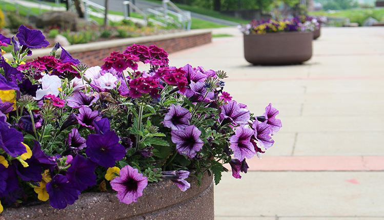 flowers plantings on campus