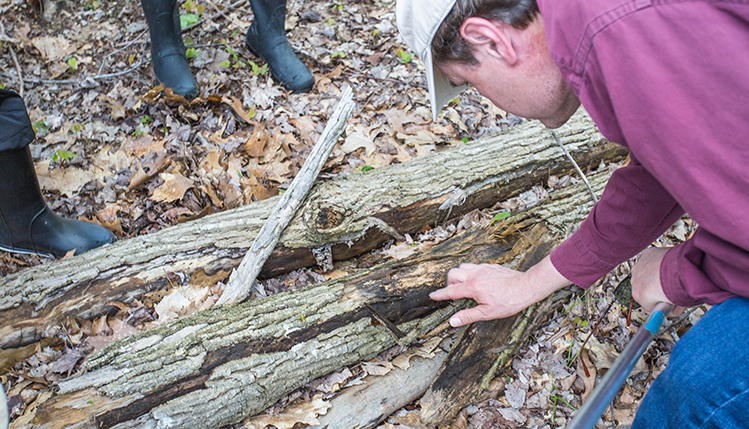 Searching logs for bug species