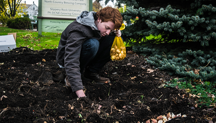 slippery rock university in bloom tulip planting event