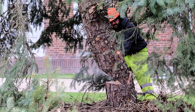 Workers cutting tree