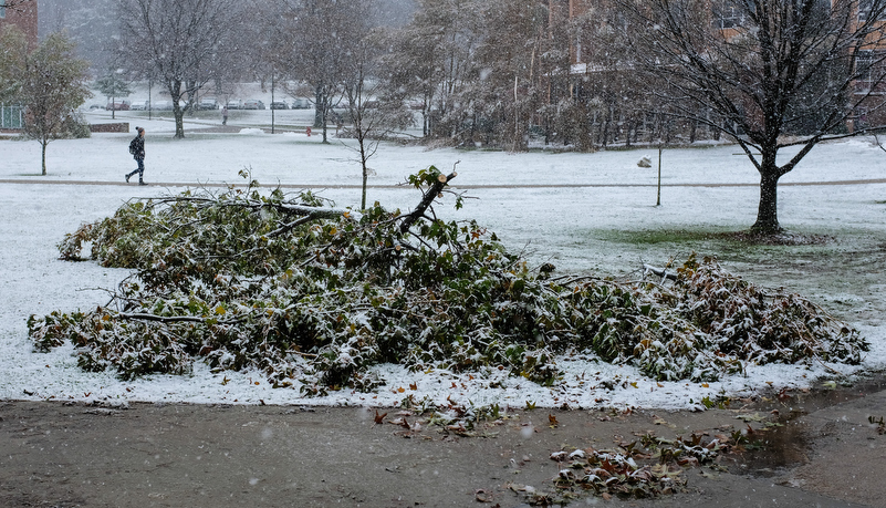 Facilities starts removing damaged trees