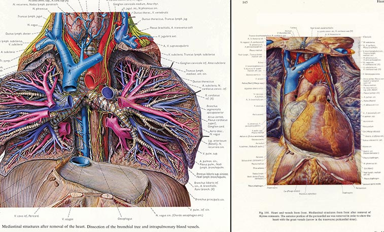 Examples fo the detailed medical illustrations