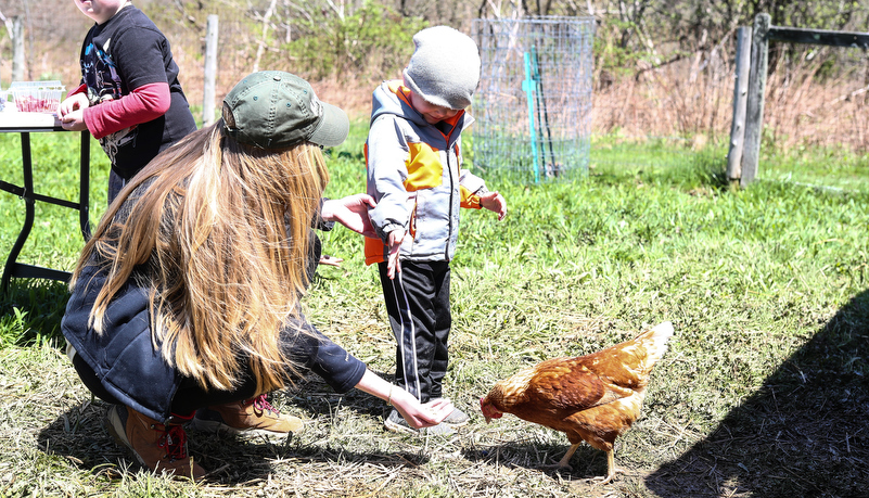 kids feeding chickens