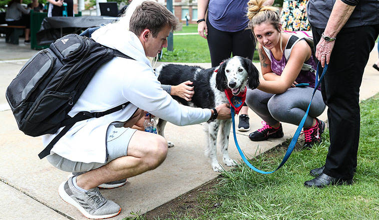 Therapy dogs in the quad